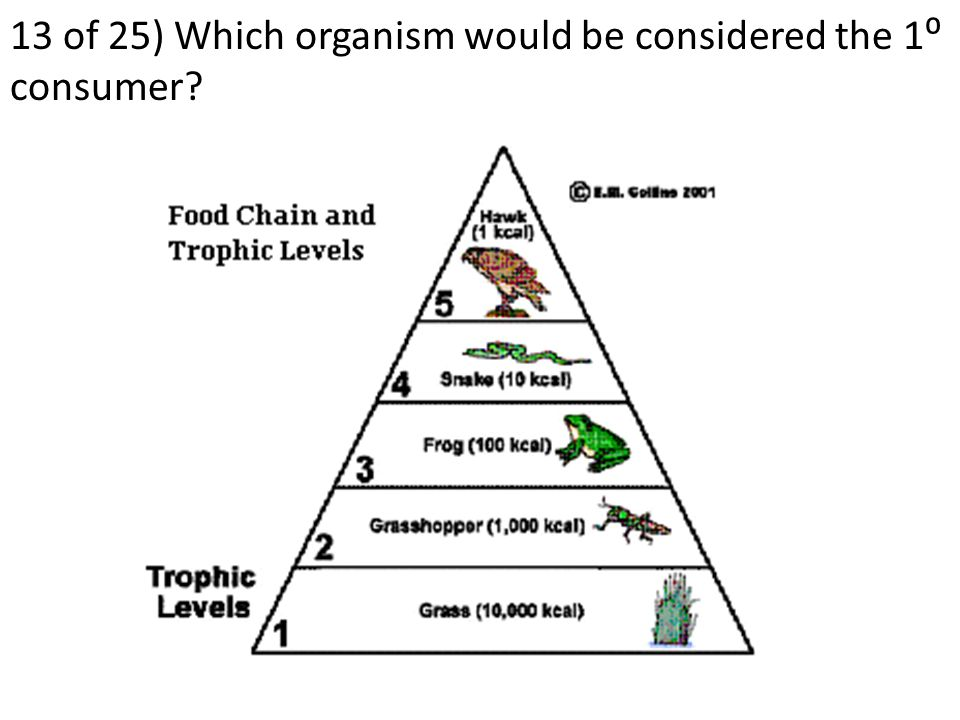 12 of 25) Which organism will often be a pioneer species to a newly created area of land