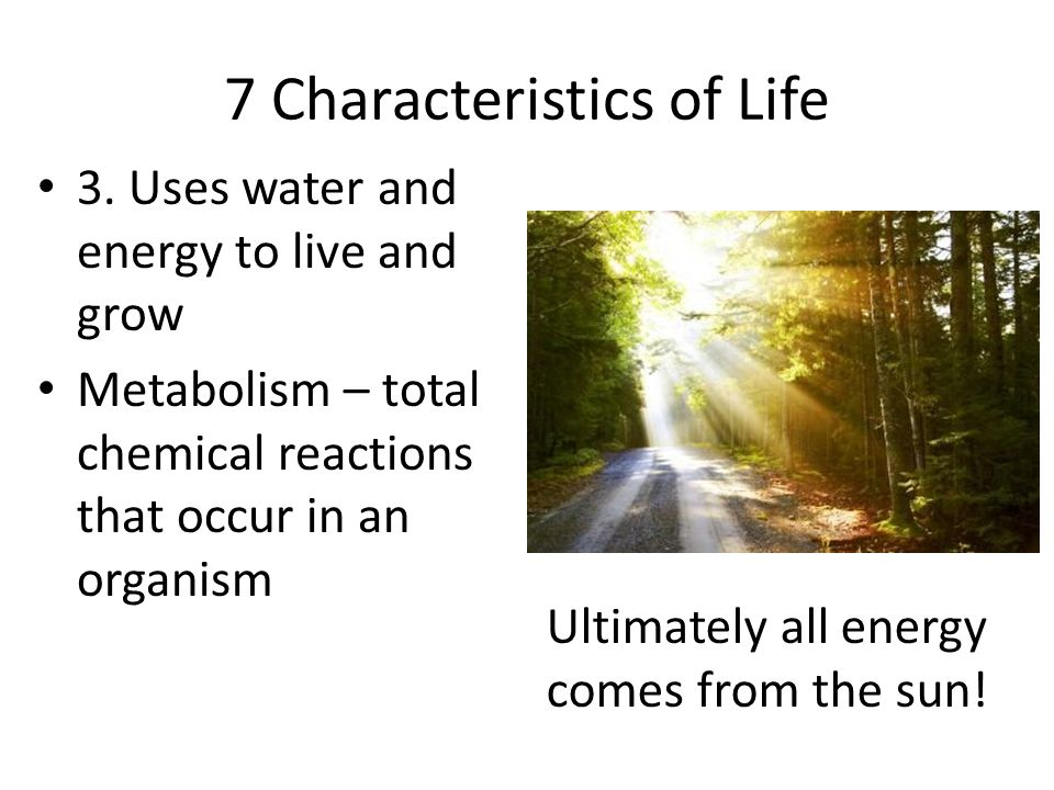 7 Characteristics of Life 3. Uses water and energy to live and grow Metabolism – total chemical reactions that occur in an organism Ultimately all ene