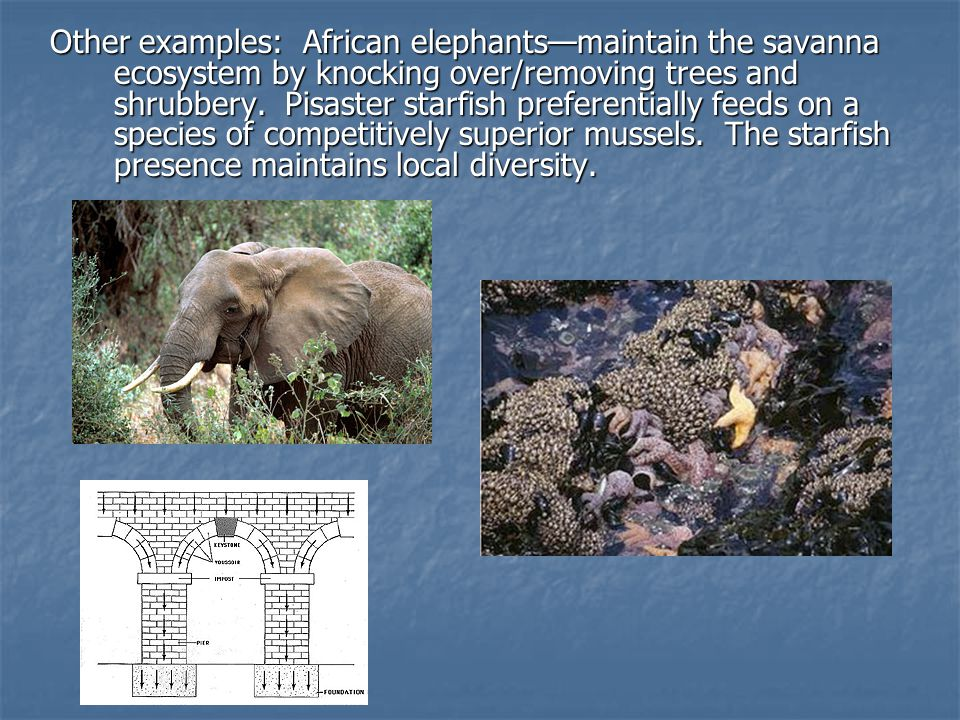 2.Species and population survival a.