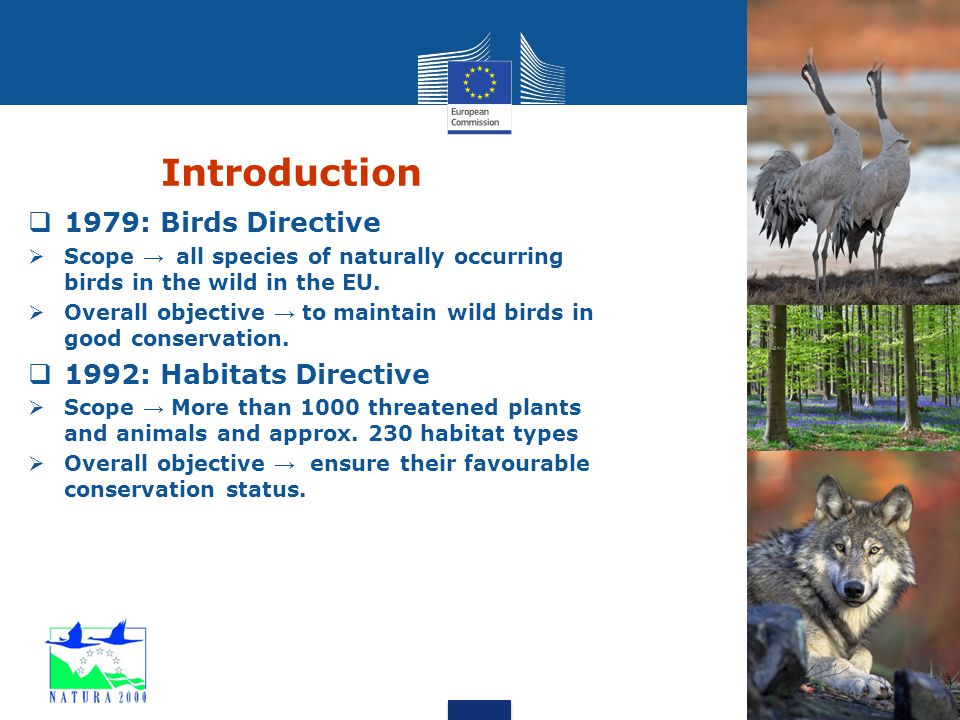 Introduction  1979: Birds Directive  Scope → all species of naturally occurring birds in the wild in the EU.  Overall objective → to maintain wild