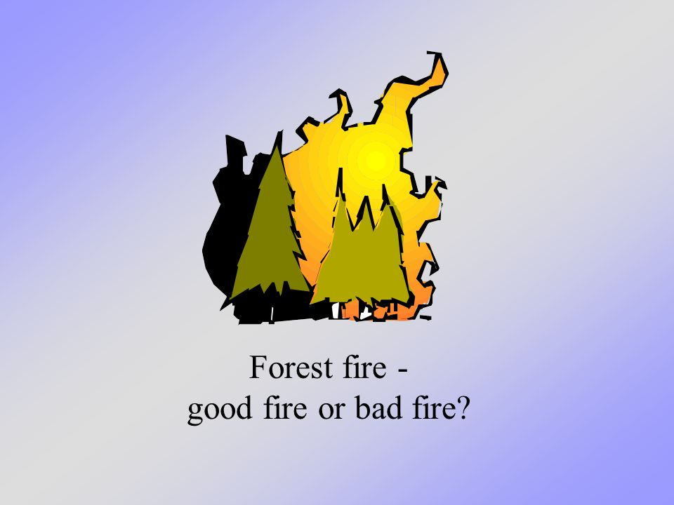 Forest fire - good fire or bad fire?