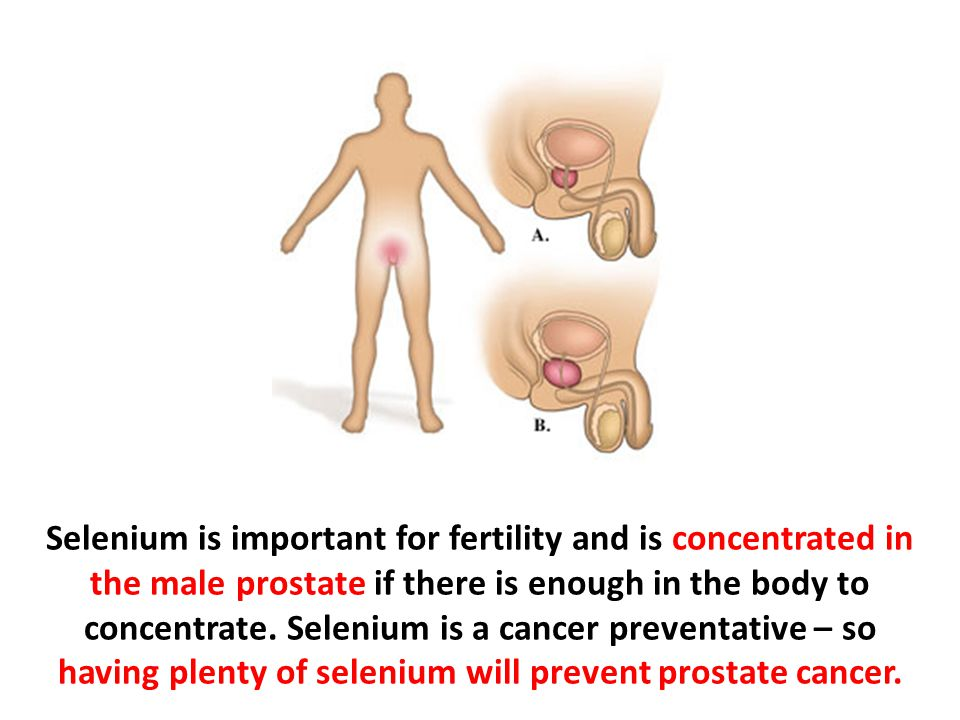 Selenium is important for fertility and is concentrated in the male prostate if there is enough in the body to concentrate.