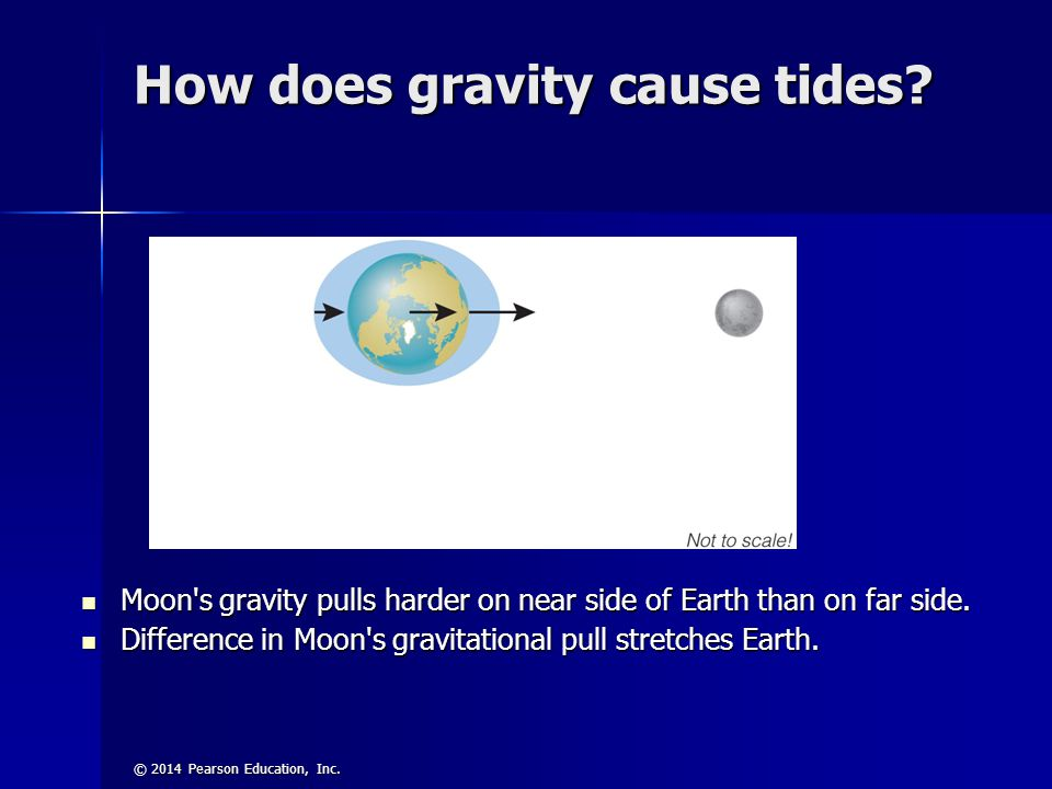 © 2014 Pearson Education, Inc. How does gravity cause tides? Moon's gravity pulls harder on near side of Earth than on far side. Moon's gravity pulls