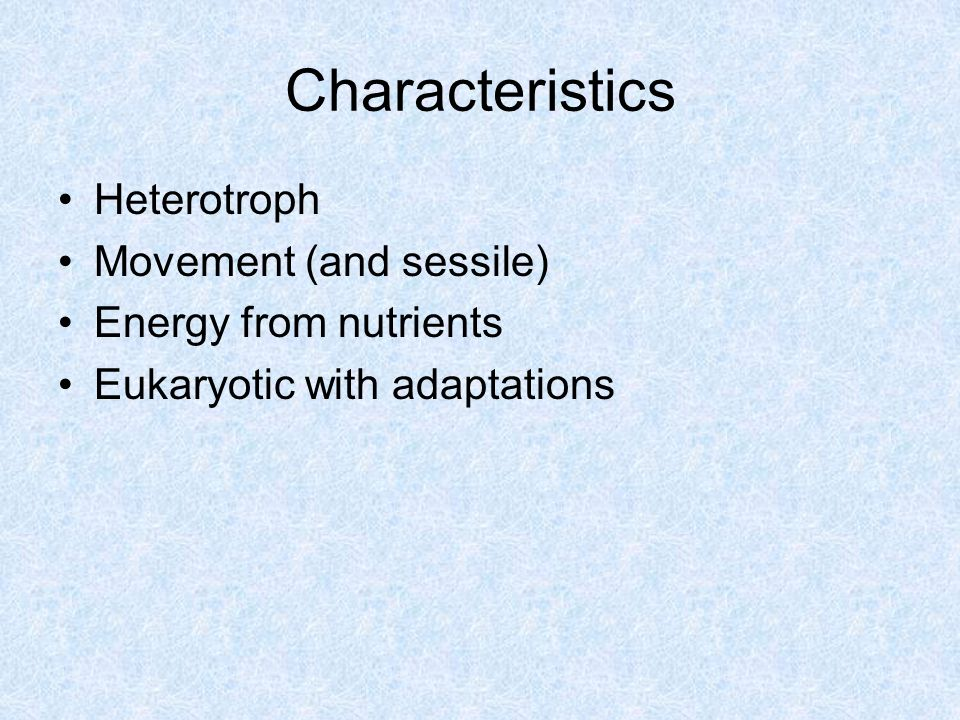 Characteristics Heterotroph Movement (and sessile) Energy from nutrients Eukaryotic with adaptations
