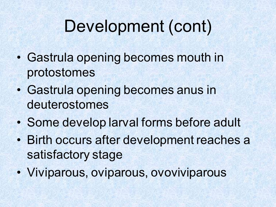 Development (cont) Gastrula opening becomes mouth in protostomes Gastrula opening becomes anus in deuterostomes Some develop larval forms before adult Birth occurs after development reaches a satisfactory stage Viviparous, oviparous, ovoviviparous
