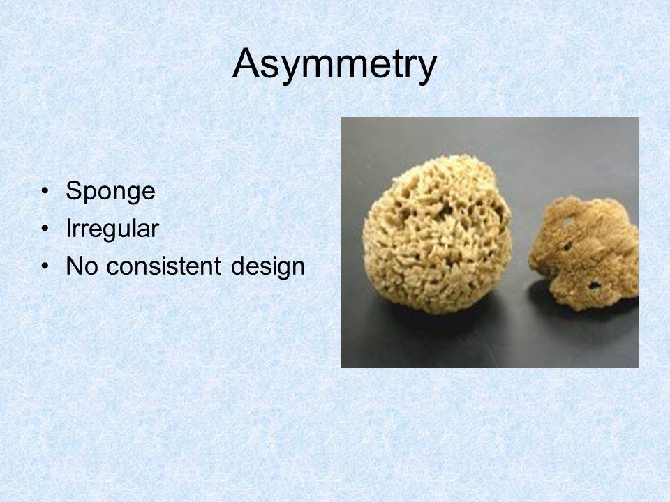 Asymmetry Sponge Irregular No consistent design