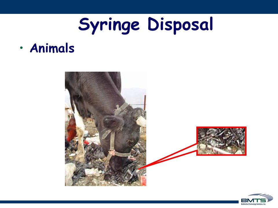 Animals at risk Syringe Disposal