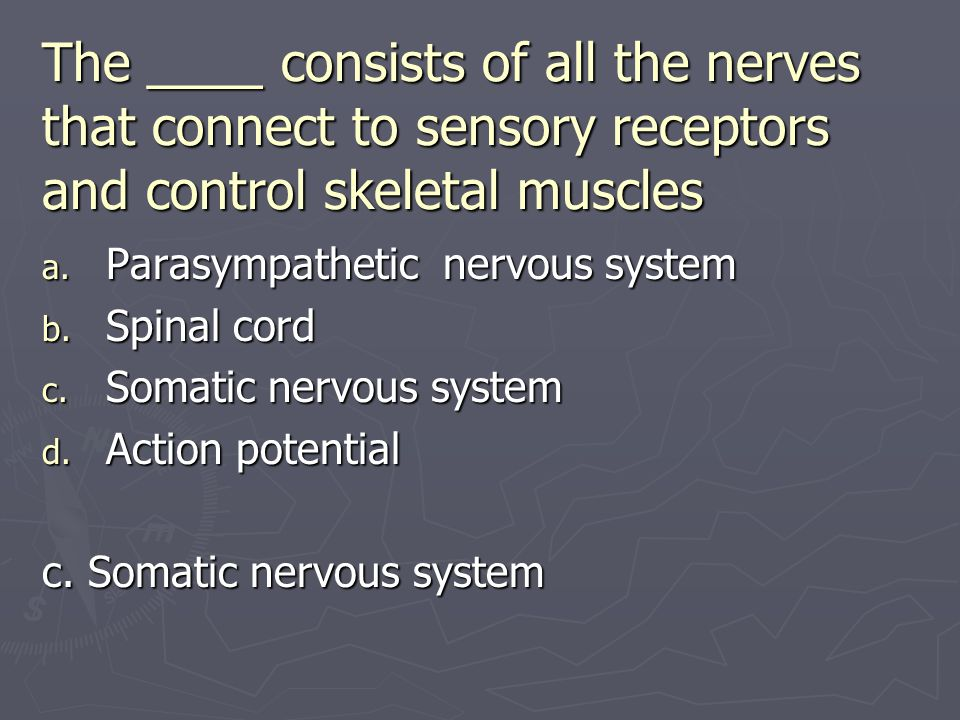 The ____ consists of all the nerves that connect to sensory receptors and control skeletal muscles a. Parasympathetic nervous system b. Spinal cord c.