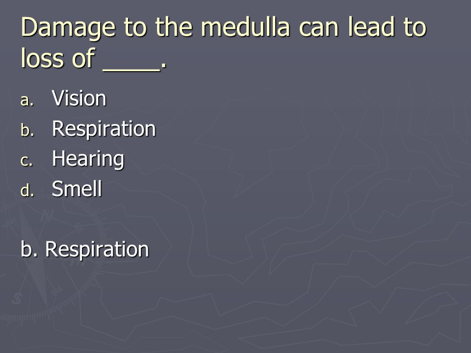 Damage to the medulla can lead to loss of ____. a. Vision b. Respiration c. Hearing d. Smell b. Respiration