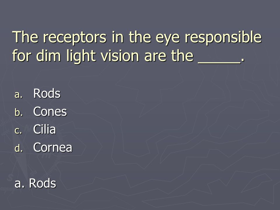 The receptors in the eye responsible for dim light vision are the _____. a. Rods b. Cones c. Cilia d. Cornea a. Rods