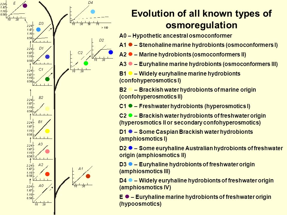 Evolution of all known types of osmoregulation A0 – Hypothetic ancestral osmoconformer A1 – Stenohaline marine hydrobionts (osmoconformers I) A2 – Marine hydrobionts (osmoconformers II) A3 – Euryhaline marine hydrobionts (osmoconformers III) B1 – Widely euryhaline marine hydrobionts (confohyperosmotics I) B2 – Brackish water hydrobionts of marine origin (confohyperosmotics II) C1 – Freshwater hydrobionts (hyperosmotics I) C2 – Brackish water hydrobionts of freshwater origin (hyperosmotics II or secondary confohyperosmotics) D1 – Some Caspian Brackish water hydrobionts (amphiosmotics I) D2 – Some euryhaline Australian hydrobionts of freshwater origin (amphiosmotics II) D3 – Euryhaline hydrobionts of freshwater origin (amphiosmotics III) D4 – Widely euryhaline hydrobionts of freshwater origin (amphiosmotics IV) E – Euryhaline marine hydrobionts of freshwater origin (hypoosmotics)