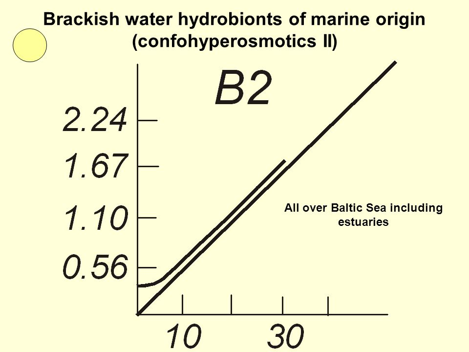 Brackish water hydrobionts of marine origin (confohyperosmotics II) All over Baltic Sea including estuaries