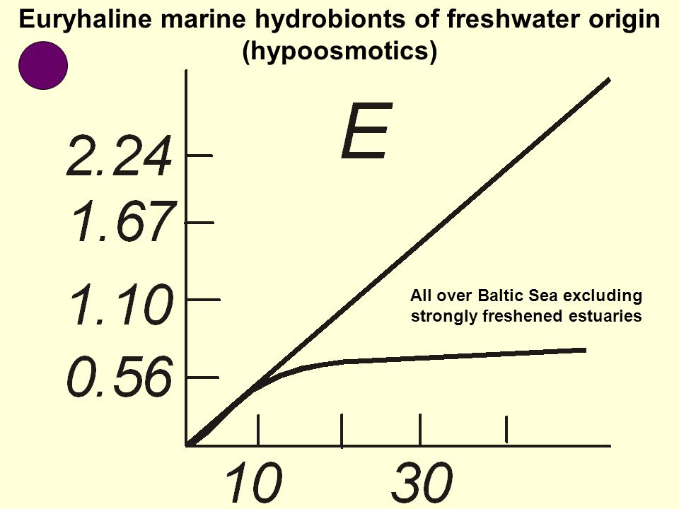 Euryhaline marine hydrobionts of freshwater origin (hypoosmotics) All over Baltic Sea excluding strongly freshened estuaries
