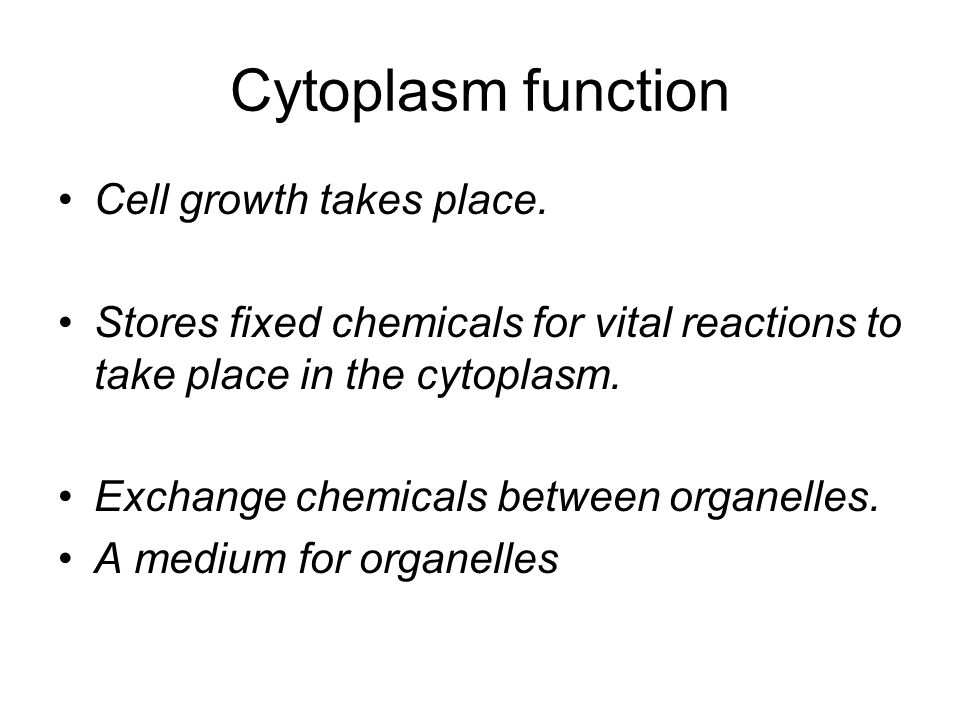 Cytoplasm function Cell growth takes place.