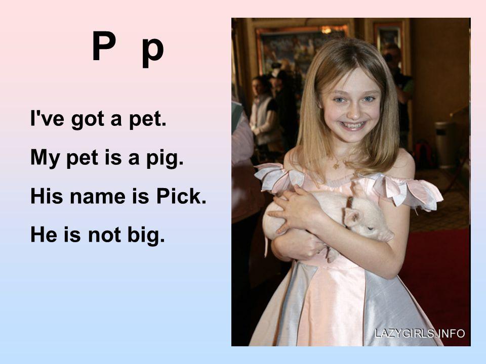 P p I ve got a pet. My pet is a pig. His name is Pick. He is not big.
