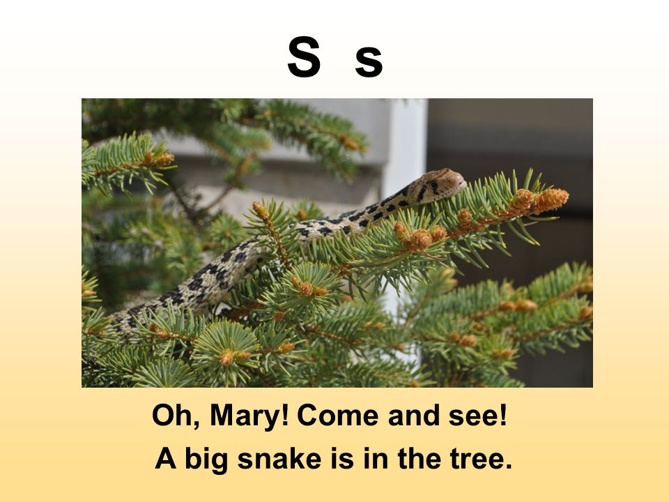 S s Oh, Mary! Come and see! A big snake is in the tree.