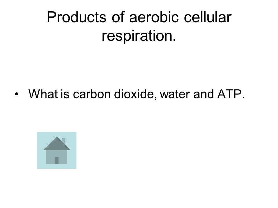 Products of aerobic cellular respiration. What is carbon dioxide, water and ATP.