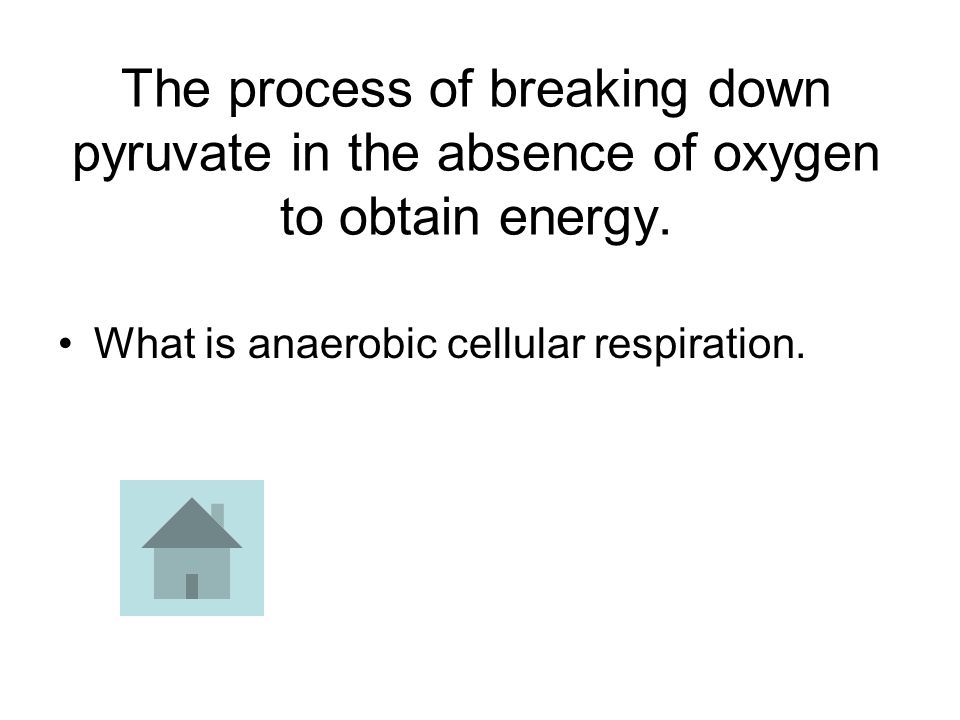 The process of breaking down pyruvate in the absence of oxygen to obtain energy. What is anaerobic cellular respiration.