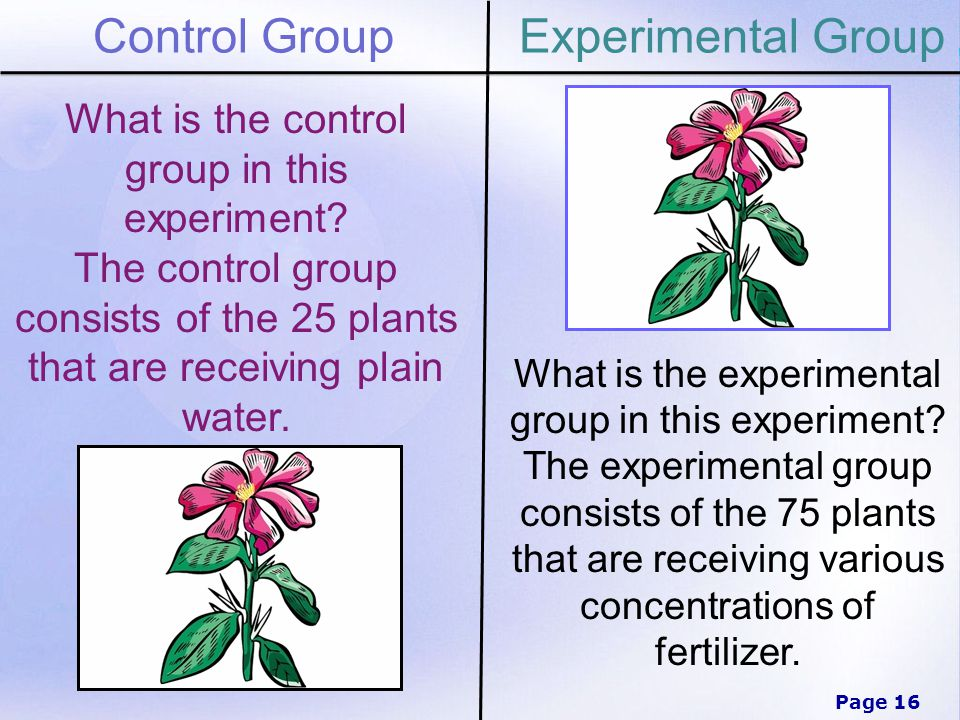 Page 16 Control GroupExperimental Group What is the control group in this experiment.