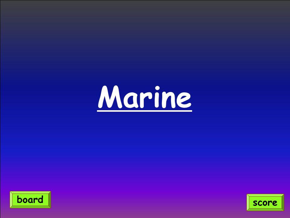 Marine score board