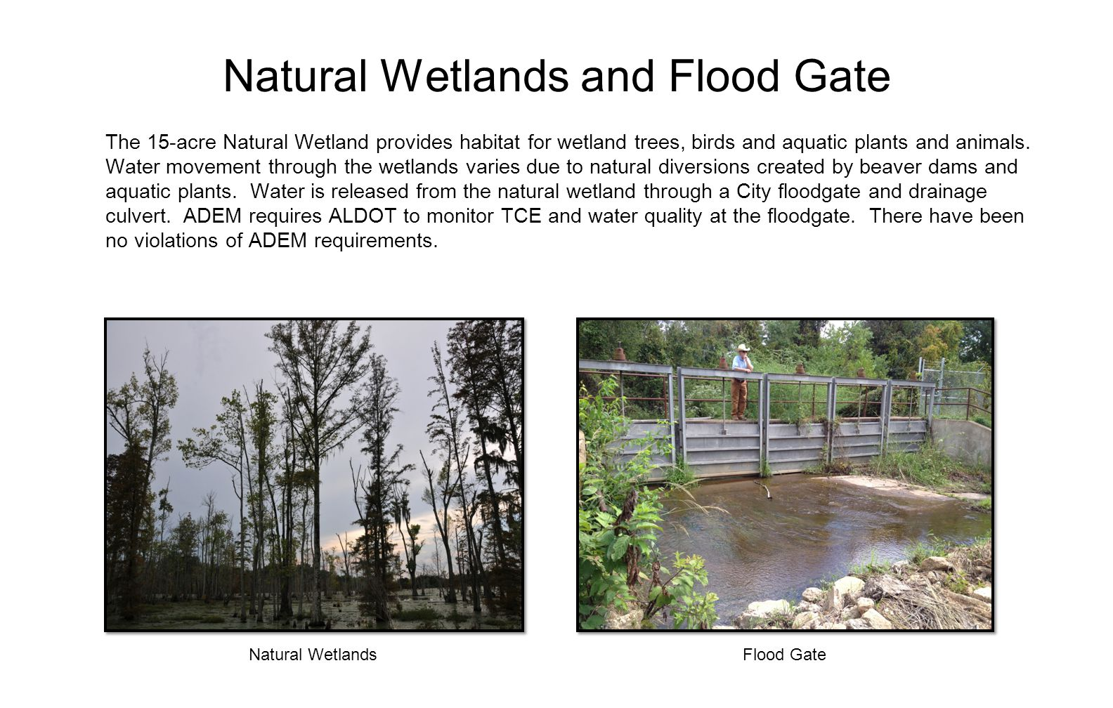 Natural Wetlands and Flood Gate The 15-acre Natural Wetland provides habitat for wetland trees, birds and aquatic plants and animals.