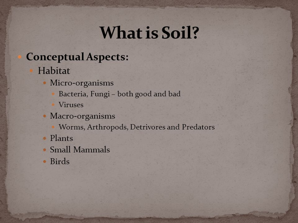 Conceptual Aspects: Provider to plant life Rooting substrate Water holding and release Nutrient supply and reserve Heat sink and release Soil gases Symbionts Bacterial and fungal Insects