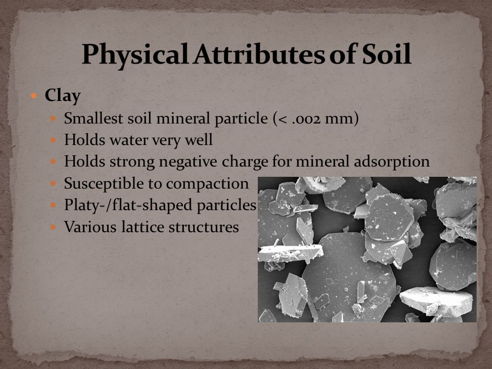 Clay Smallest soil mineral particle (<.002 mm) Holds water very well Holds strong negative charge for mineral adsorption Susceptible to compaction Platy-/flat-shaped particles Various lattice structures
