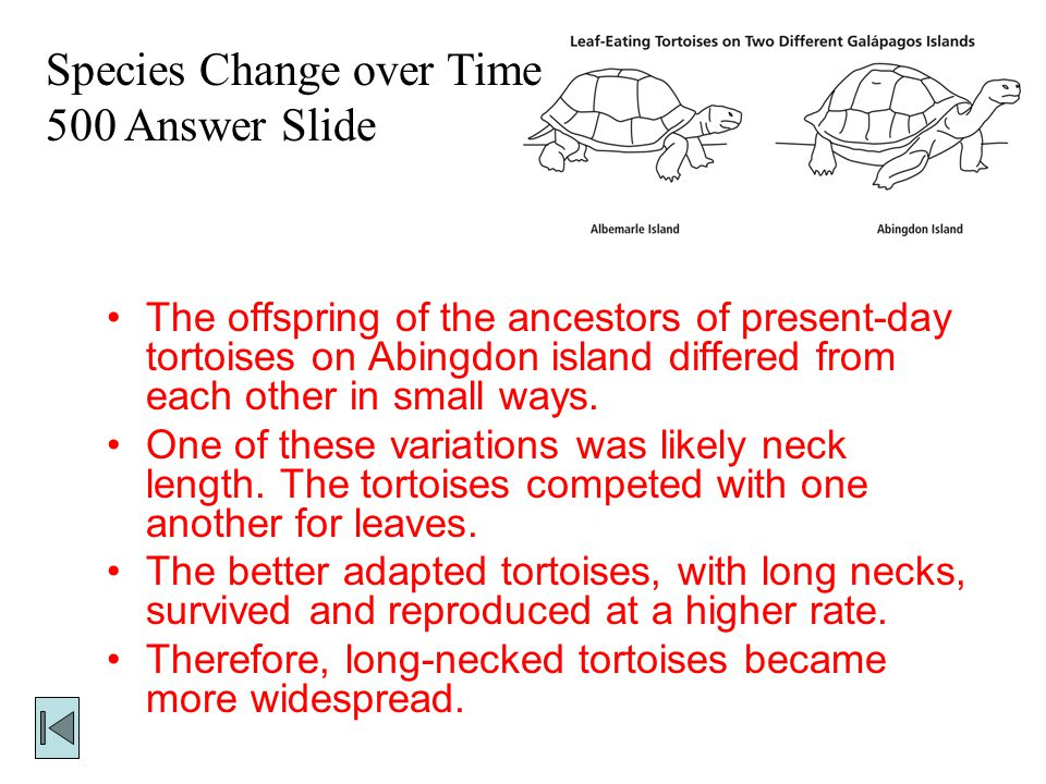 Species Change over Time 500 This is how variation and adaptation may have led to the development of long- necked tortoises on Abingdon Island.