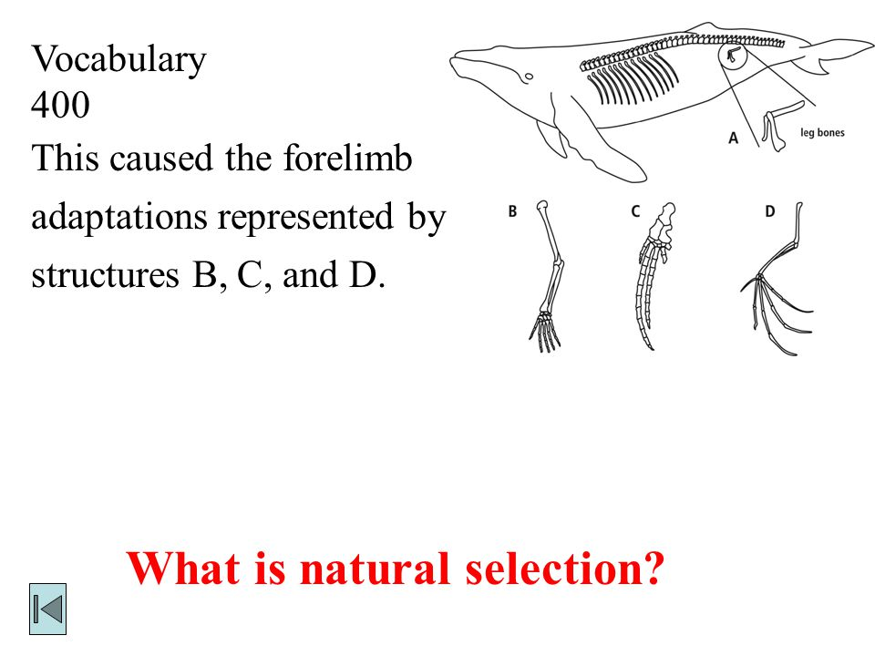 Vocabulary 400 This caused the forelimb adaptations represented by structures B, C, and D.