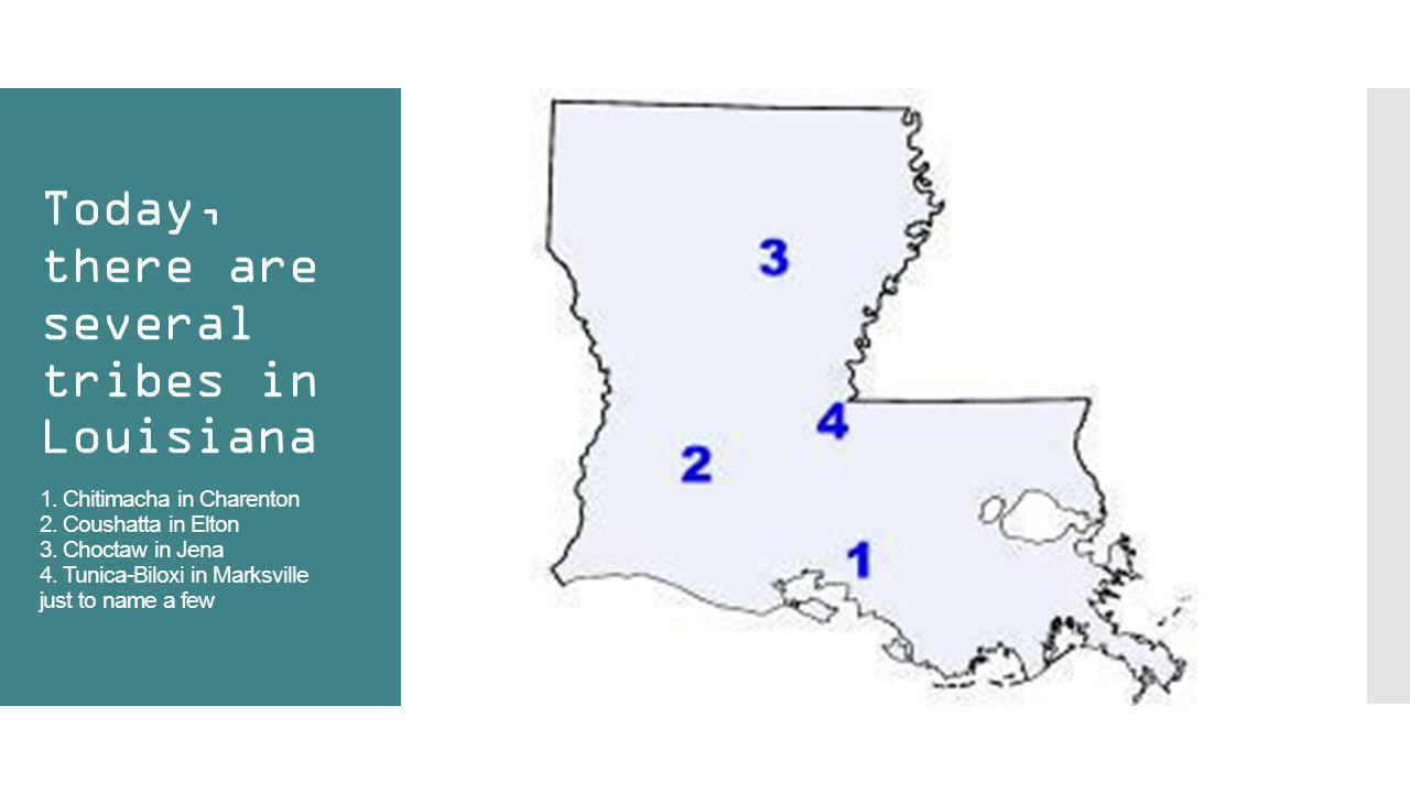 Today, there are several tribes in Louisiana 1. Chitimacha in Charenton 2. Coushatta in Elton 3. Choctaw in Jena 4. Tunica-Biloxi in Marksville just t