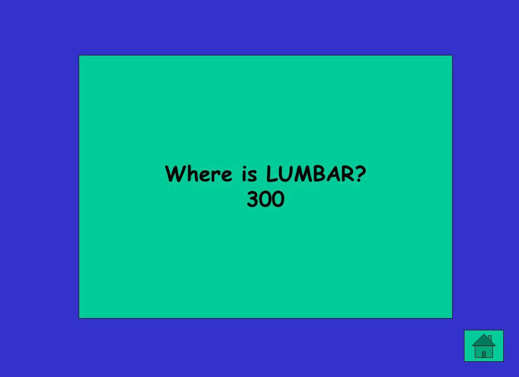 Where is LUMBAR 300
