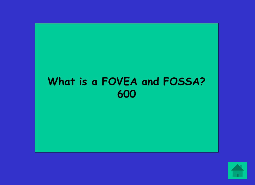 What is a FOVEA and FOSSA 600