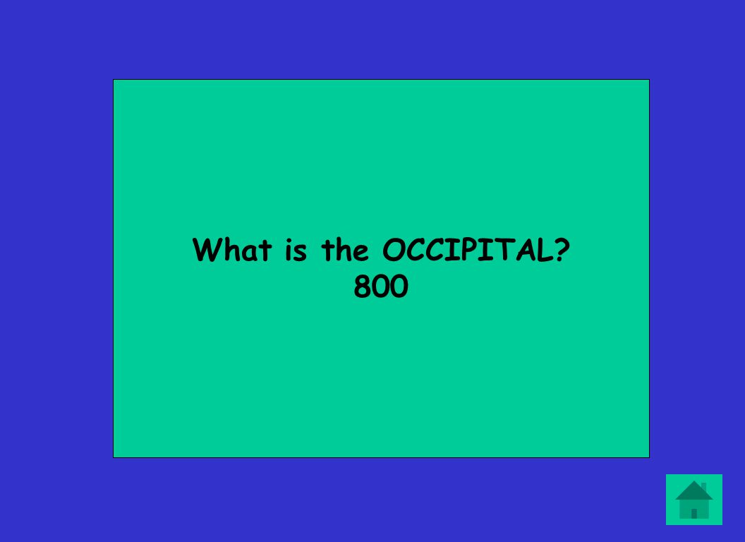 What is the OCCIPITAL? 800