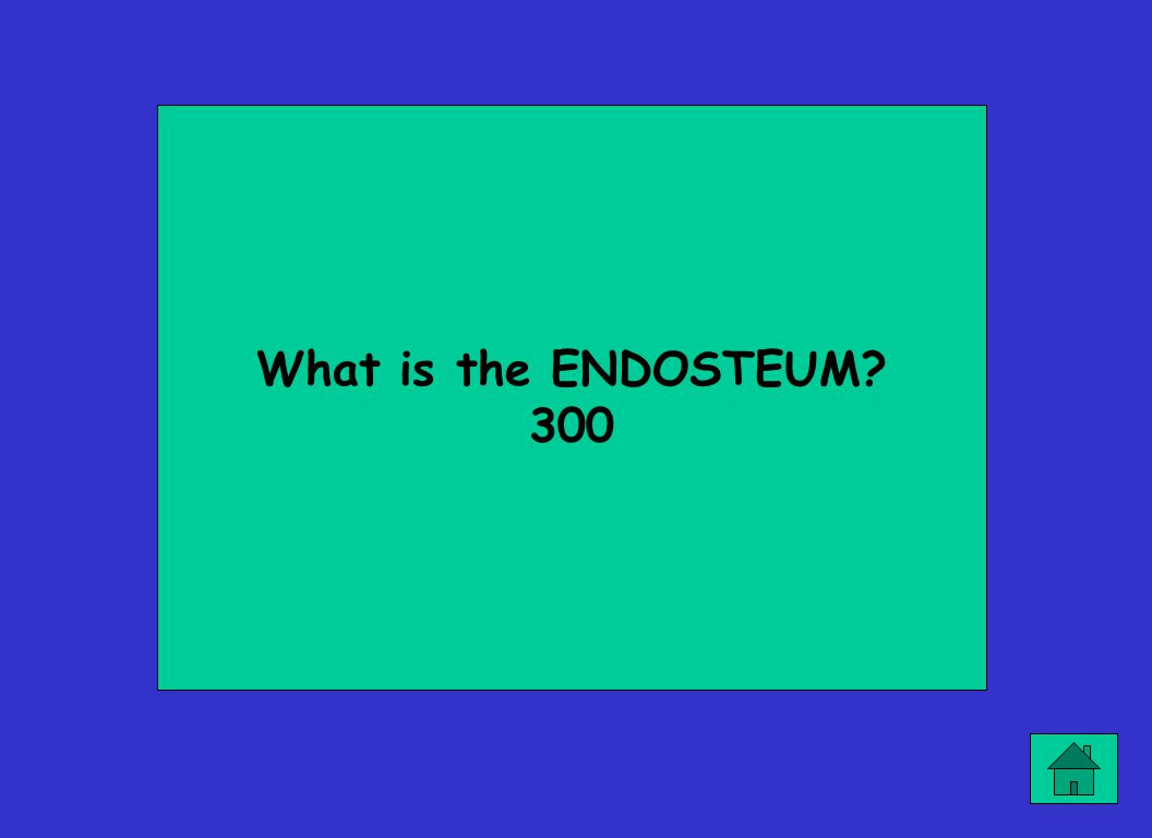 What is the ENDOSTEUM? 300
