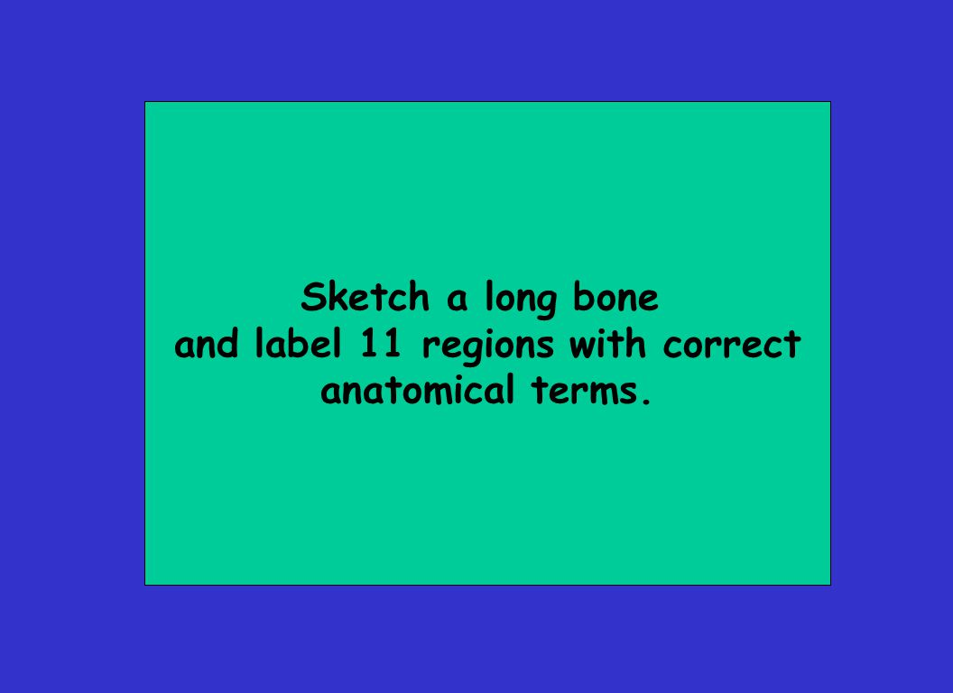 Sketch a long bone and label 11 regions with correct anatomical terms.