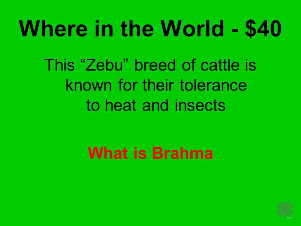 Where in the World - $40 This Zebu breed of cattle is known for their tolerance to heat and insects What is Brahma