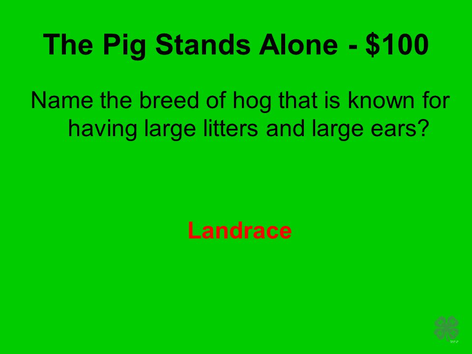 The Pig Stands Alone - $100 Name the breed of hog that is known for having large litters and large ears? Landrace