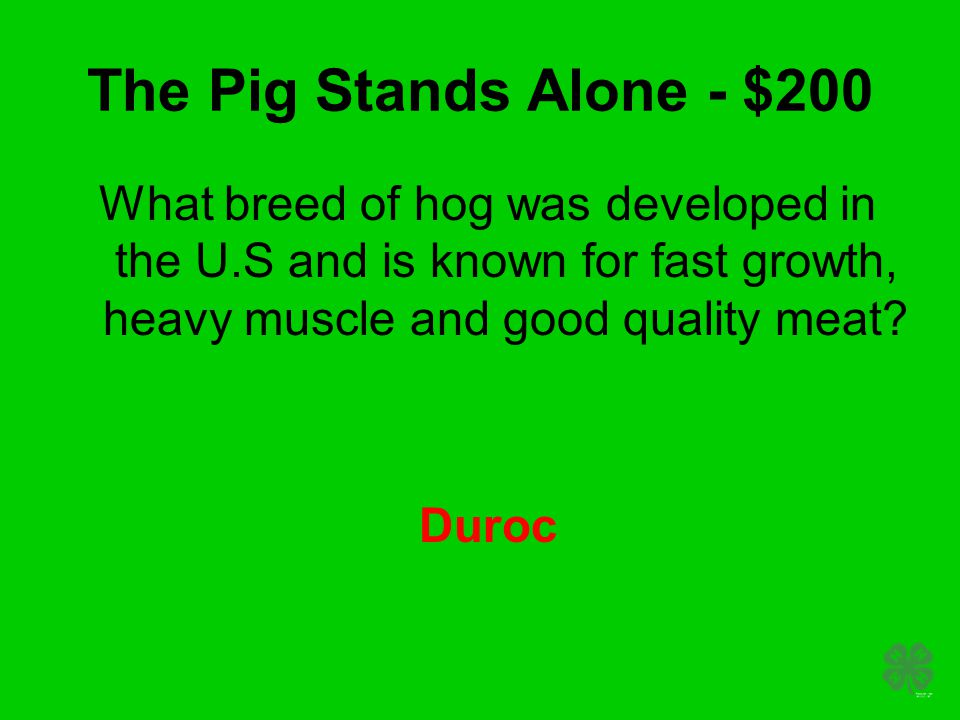 The Pig Stands Alone - $200 What breed of hog was developed in the U.S and is known for fast growth, heavy muscle and good quality meat? Duroc