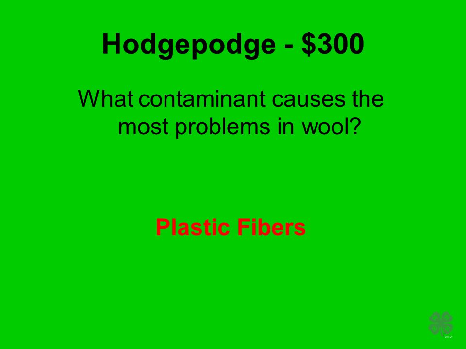 Hodgepodge - $300 What contaminant causes the most problems in wool? Plastic Fibers