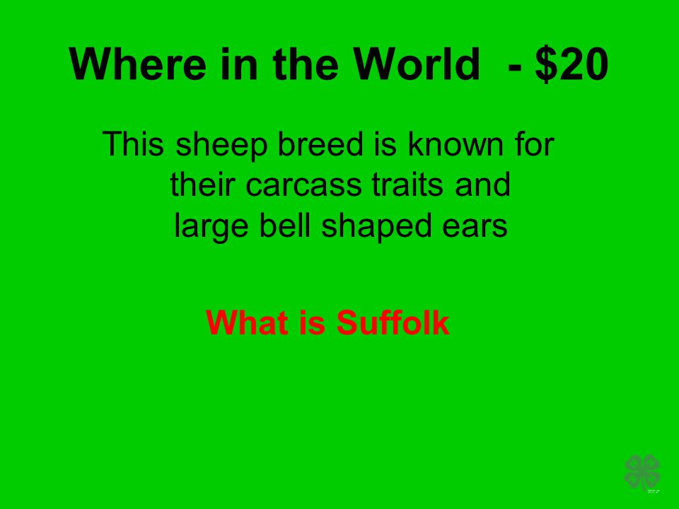 Where in the World - $20 This sheep breed is known for their carcass traits and large bell shaped ears What is Suffolk