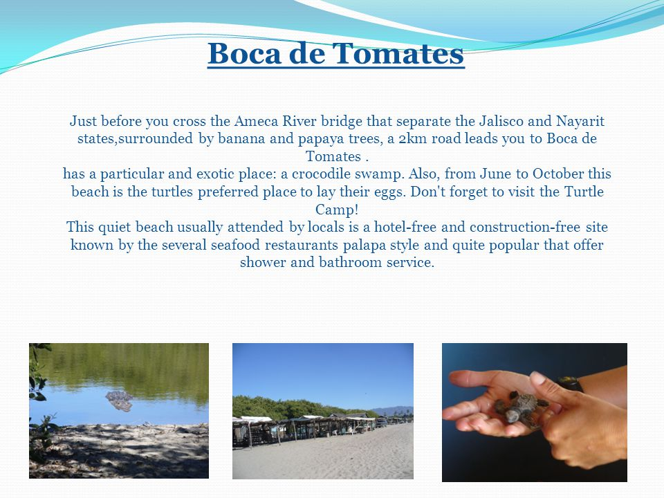 Boca de Tomates Just before you cross the Ameca River bridge that separate the Jalisco and Nayarit states,surrounded by banana and papaya trees, a 2km road leads you to Boca de Tomates.
