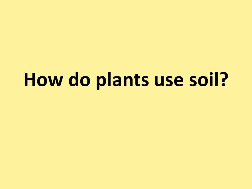 How do plants use soil?