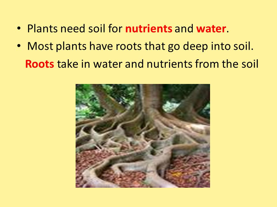 Plants need soil for nutrients and water. Most plants have roots that go deep into soil. Roots take in water and nutrients from the soil