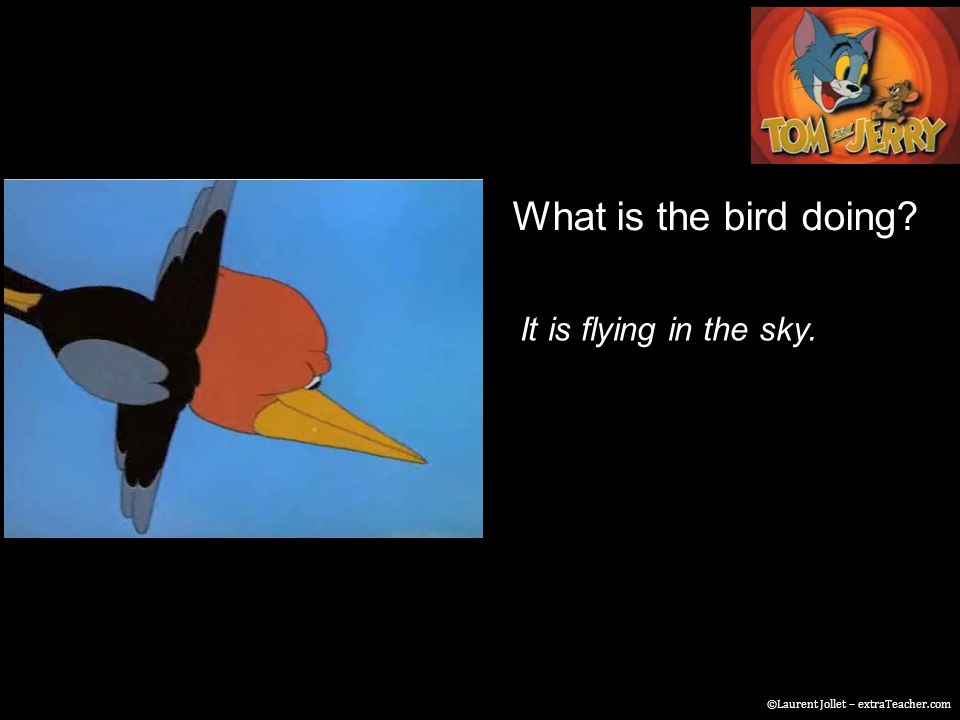 What is the bird doing? It is flying in the sky. ©Laurent Jollet – extraTeacher.com