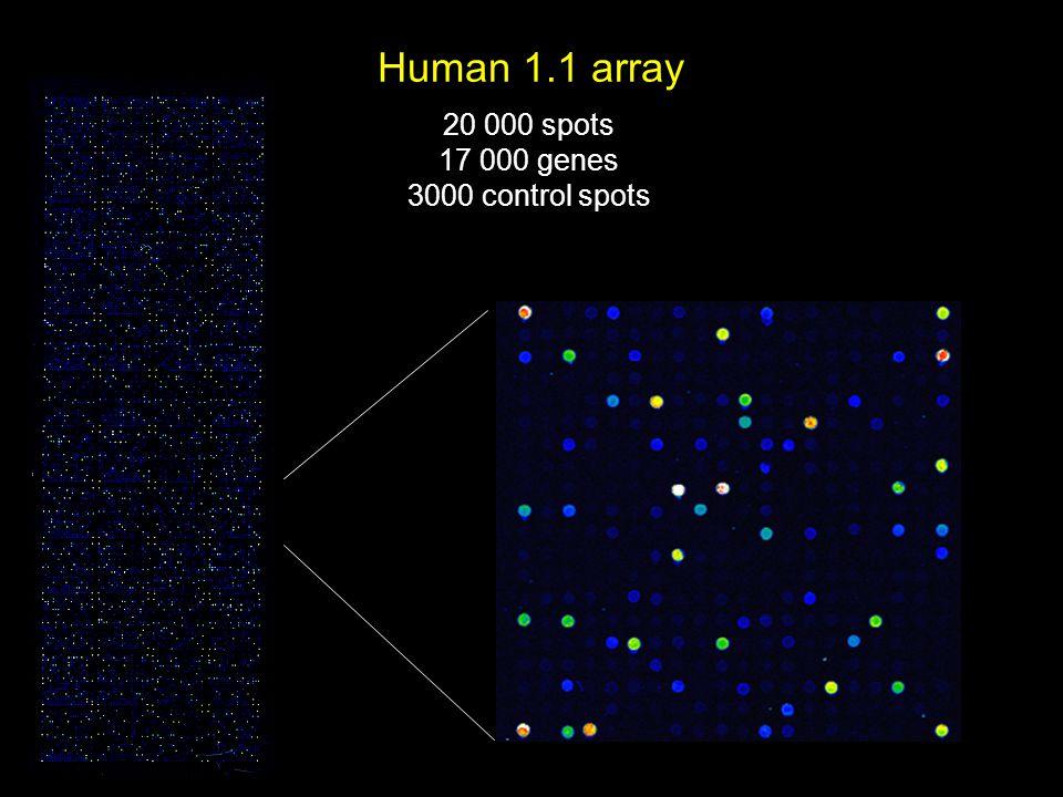 Human 1.1 array 20 000 spots 17 000 genes 3000 control spots