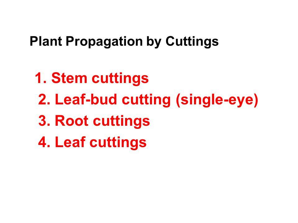 1. Stem Cuttings Softwood Cuttings Semi-Hardwood Cutting Hardwood Cuttings Herbaceous Cuttings