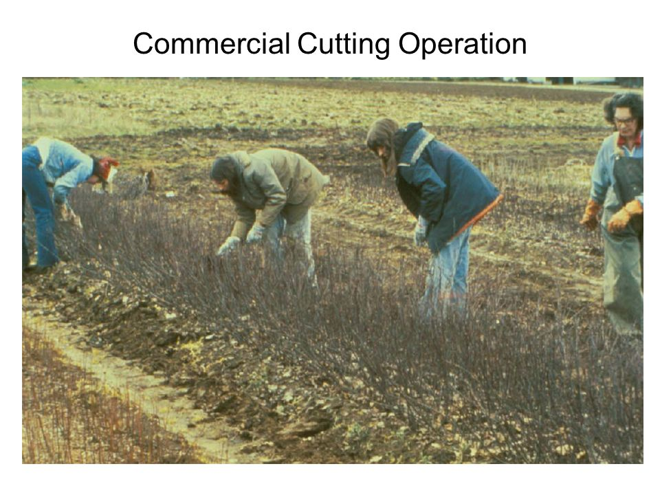 Commercial Cutting Operation