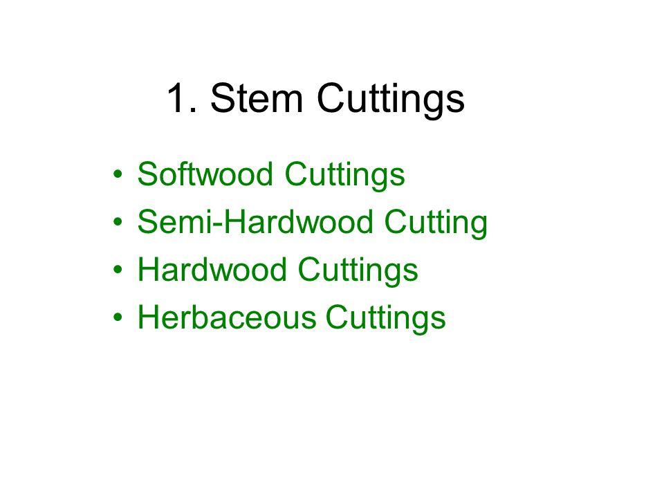 Single Node Cuttings Double-Eye Single Node Cutting (DE) - Healthier than SE - Less disease attacks Single-Eye Single Node Cutting (SE) - Largest no.
