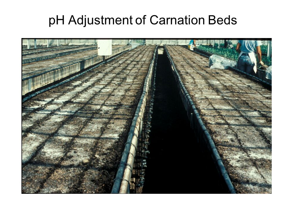pH Adjustment of Carnation Beds