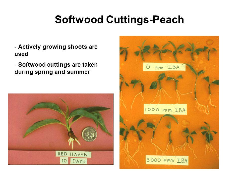 Influence of IBA on Semi-Hardwood Cuttings - Cordia 1-Control, 2-50% ethanol, 3-100 ppm, 4-1000 ppm, 5-2000 ppm, 6-4000 ppm, 7-6000 ppm, 8-8000 ppm, 9-10000 ppm IBA